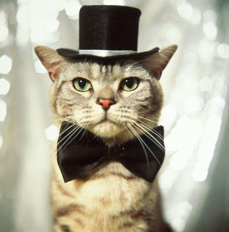 Into The World of Fat Cats: Cats in Hats