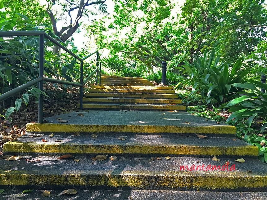 SBG Steps