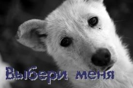Собака белого окраса