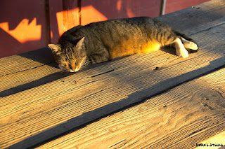 A cat takes a nap in the warmth of the setting sun on an autumn day, at The Little Farm, in Miami, Florida.