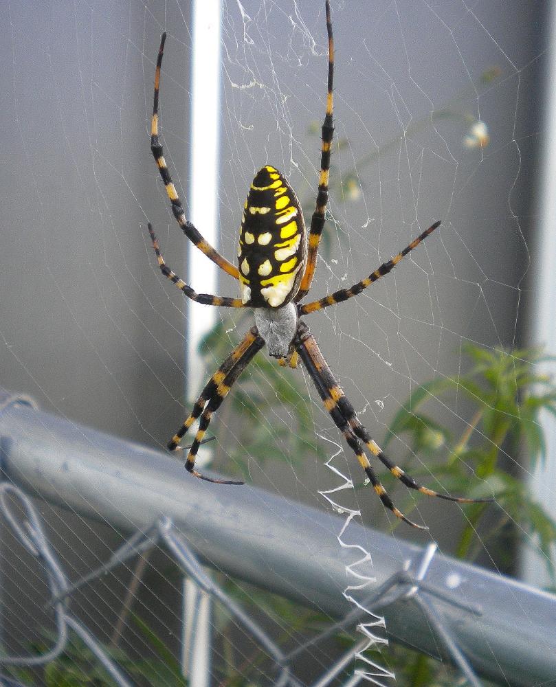 just found this big spider in my basement neogaf 809x1000 jpeg