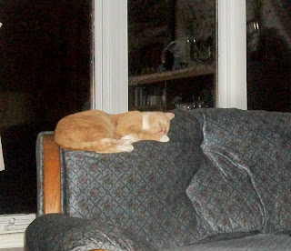 Sleeping Orange Tabby