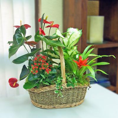 Blog de plantas de interior luisa - Decoracion de plantas ...