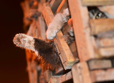 Ativistas chineses resgatam mais de mil gatos que seriam servidos em restaurante