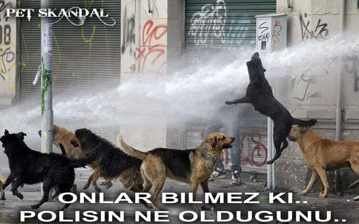 cops using water cannon against dogs
