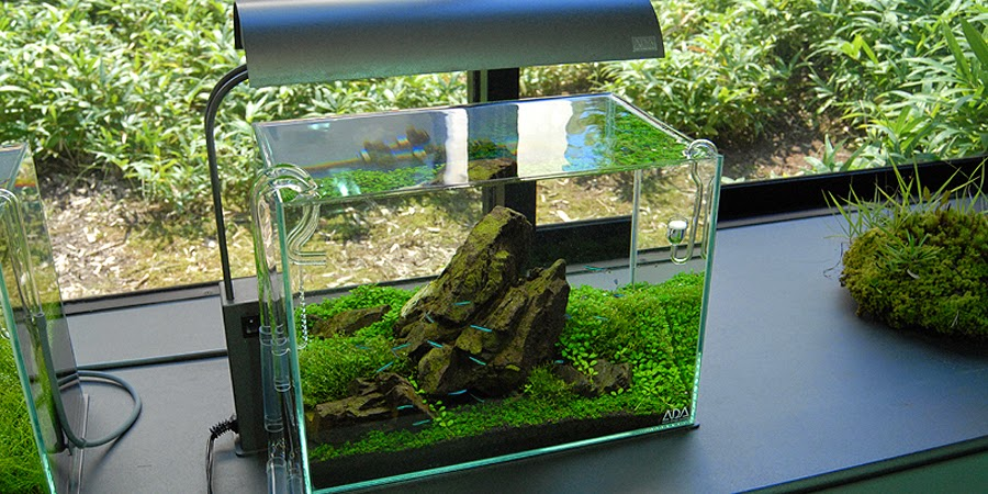 Inilah 10 Ide Kreasi Untuk Membuat Mini Aquascape   Ikan ...