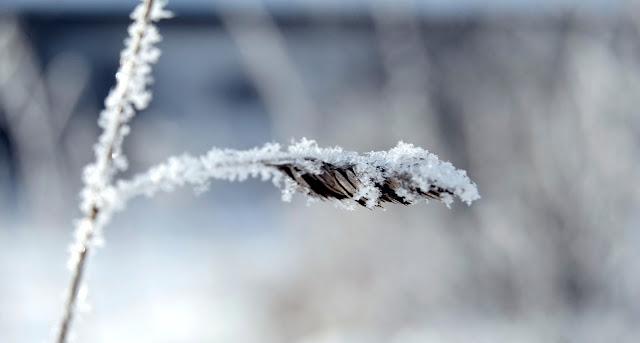 # 53 Śnieg