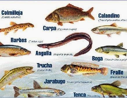 conoce los diferentes pescados de agua dulce y agua salada