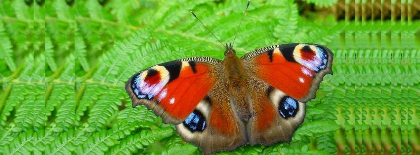 Une jolie image de couverture facebook papillon