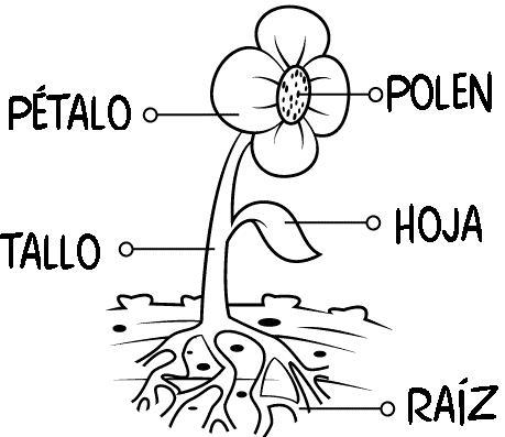 ... de una flor con los nombres de sus partes para imprimir y colorear