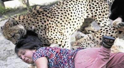Hot Foto : Istri Diterkam Cheetah, Suami Asyik Memotret