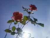 Prenúncio da Primavera