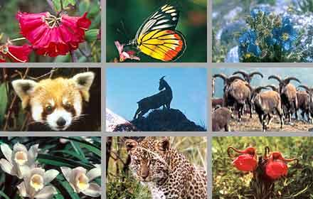 Flora & Fauna di Indonesia