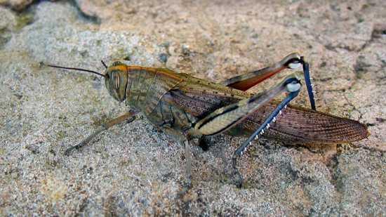 Hewan Invertebrata Terbesar - infolabel.blogspot.com