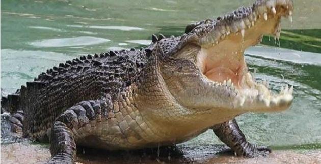 Τον έφαγε κροκόδειλος ενώ έπλενε τα χέρια του σε ποτάμι!