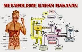 Faktor Penghambat Metabolisme Pada Tubuh