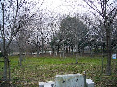 大阪府・深北緑地 桜の園