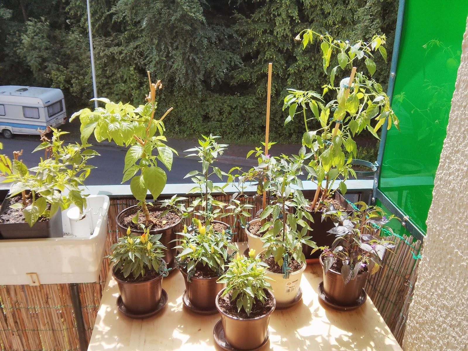 chili farmer mein chili balkon. Black Bedroom Furniture Sets. Home Design Ideas