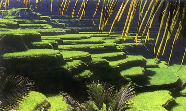 Tempat wisata terpopuler#3 Ubud