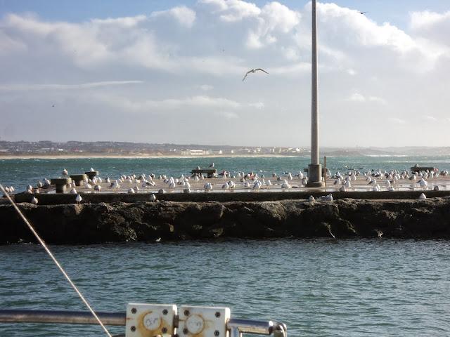 seaguls on land