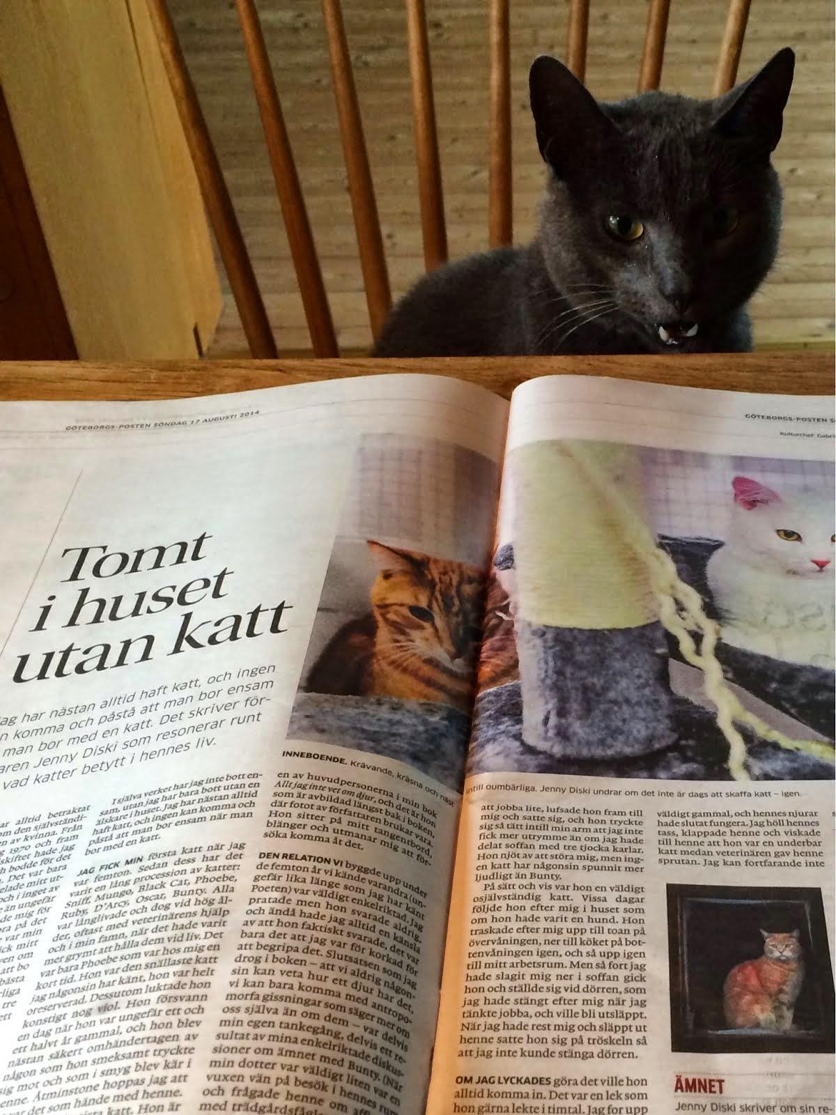 Jenny Diski om katter