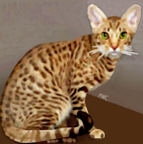 Ocicat by Marian Cates