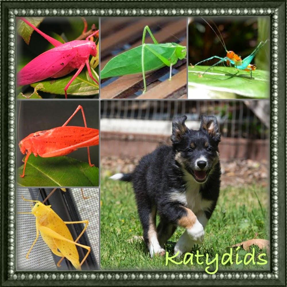 KickStarts Katydid It