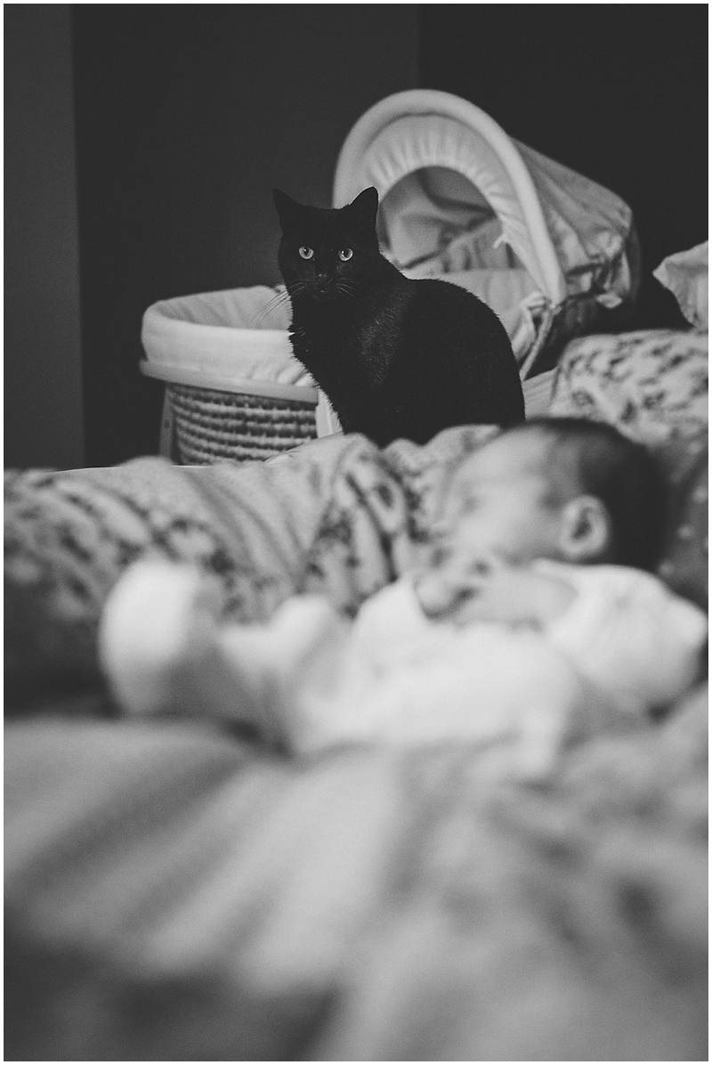 Cat with newborn baby