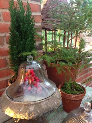Fru pedersens have: selvsåede grantræer, flot julepynt eller ukrudt.