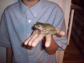 Pickles, a female White Dumpy Frog
