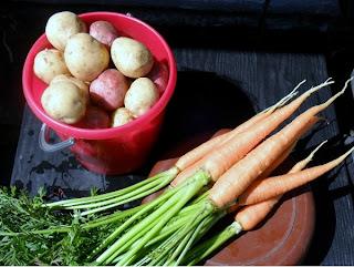 10 июля, первый молодой картофель