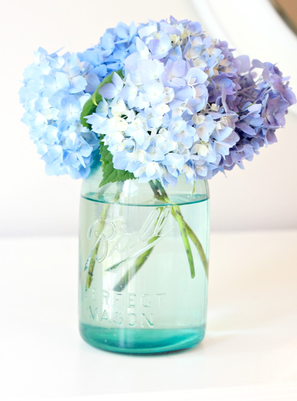 Watch How to Keep Hydrangeas Alive video