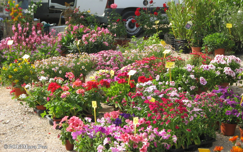 Flowers at Algoz market