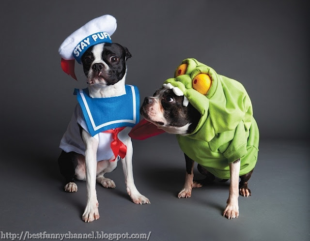 Two funny dogs in costumes.