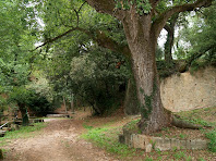 Una gran alzina de tres troncs i un gran roure precedeixen l'entrada al Mas La Font