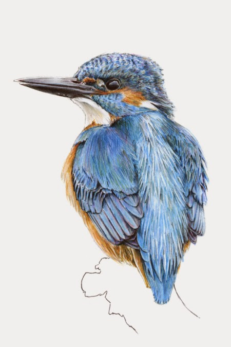 Handmade Framed Kingfisher, Bird in The Hand | Objets de Désir