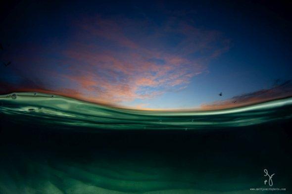 Matty Smith fotografia natureza na linha d'água over-under vida marinha luz