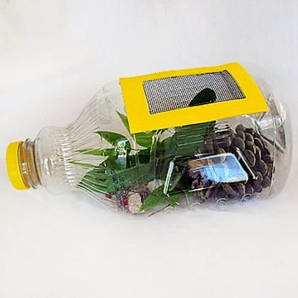 https://spoonful.com/crafts/juice-bottle-bug-catcher