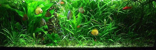 Produits anti algues engrais pour aquarium conditionneur for Quelle plante aquarium poisson rouge