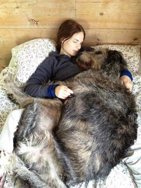 Perros que aun se creen cachorros
