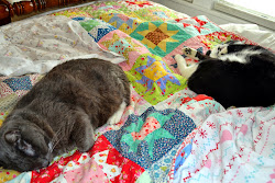 Tex and Harry love quilts too!