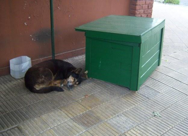 C mo hacer una caseta exterior para perros o gatos - Como hacer una caseta de obra ...