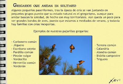 Cuaderno de campo Javier Pérez