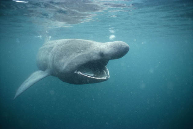 What Is A Shark Natural Food Source