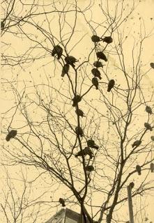http://3.bp.blogspot.com/-KFPeB1HYnBU/ULFOLhG2FwI/AAAAAAAAx8U/AIO49pOyioE/s400/52088-birds_in_tree.jpg