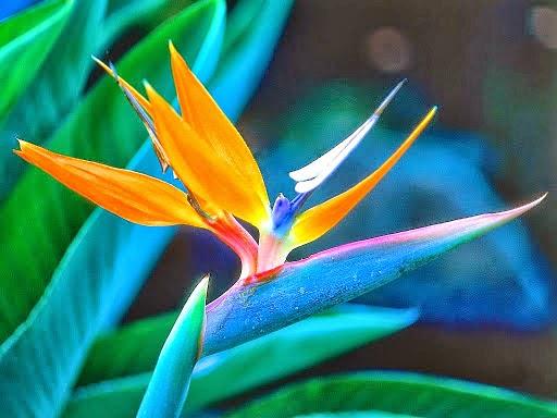 Τα 10 πιο σπάνια φυτά