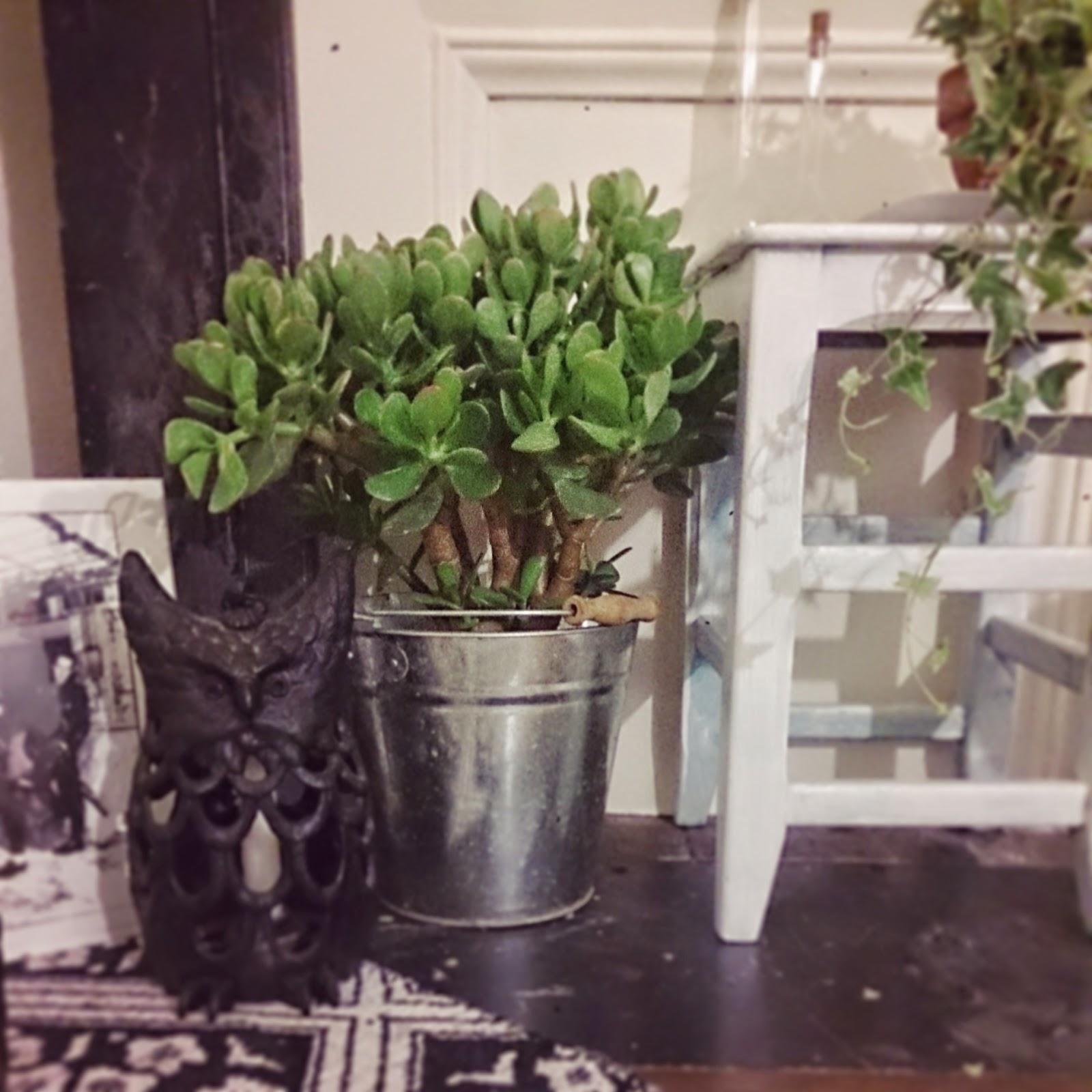 plantes magiques plantes d polluantes. Black Bedroom Furniture Sets. Home Design Ideas
