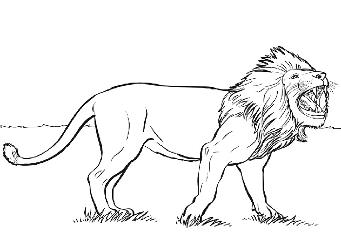 Wild Animal Lion King of The Jungle Coloring Pages title=