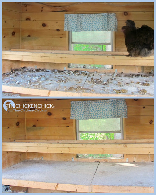 Removing droppings from the coop keeps it drier, reducing the risk of frostbite, the risk of bumblefoot infections, and makes the air healthier for them to breathe.