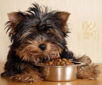Dg Puppy Dog Leapfrog